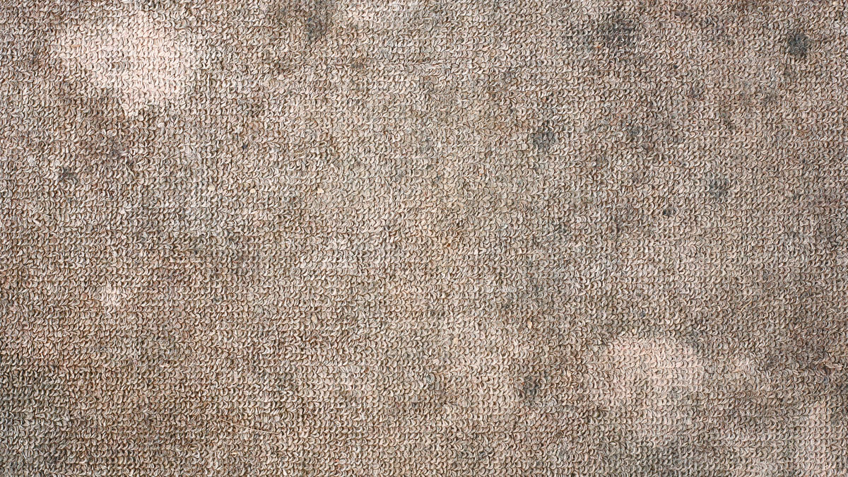 Signs That Your Carpet Has Mold